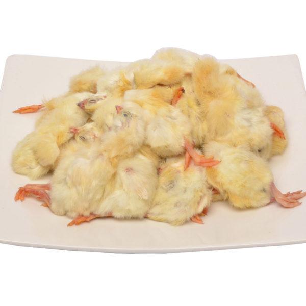 Day-old Chicks | raw cat food | raw dog food | raw cat food | raw pet food | chefs4pets