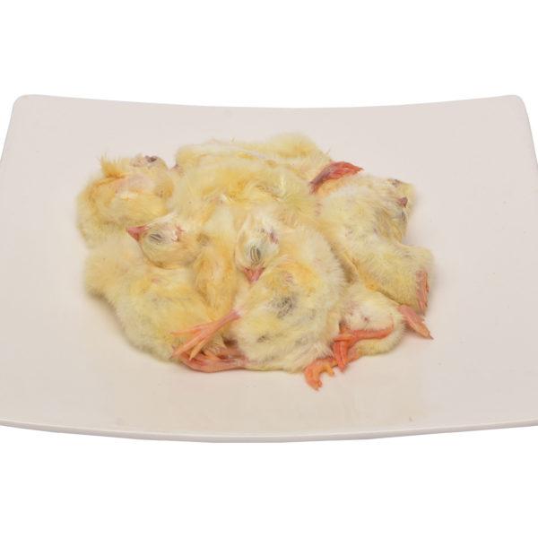 Day-old Chicks | raw cat food | raw dog food | raw pet food | chefs4pets